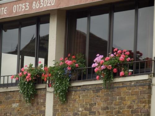 những lẳng hoa viền hiệu ăn Ý gần Lâu đài Windsor